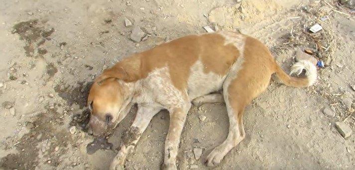 昏睡状態の犬
