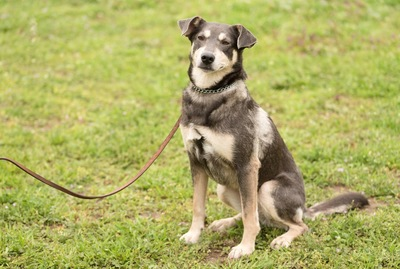 芝生で座る犬