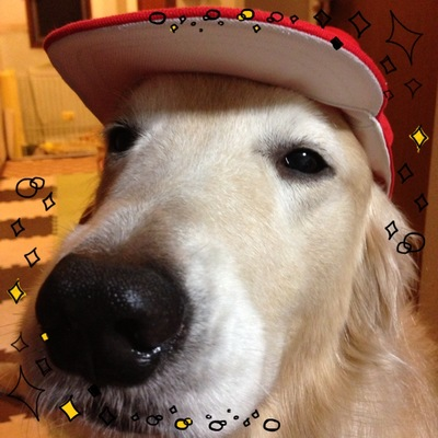 赤白帽の鼻デカ