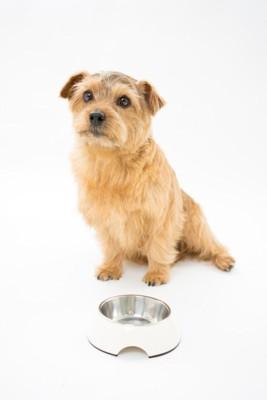 ご飯の催促をしている犬