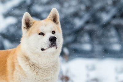雪の中に佇む犬