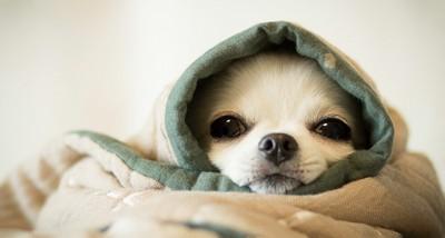 布に包まれている犬