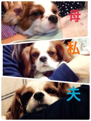 3つの表情のぷぅ