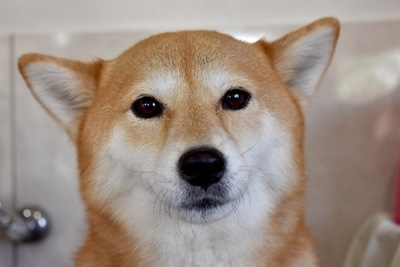 無表情の犬