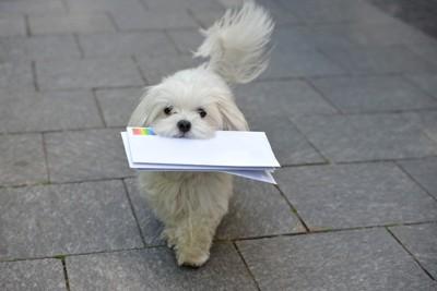 手紙をくわえて持ってくる白い犬
