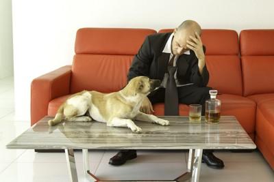 落ち込んでいる男性と犬