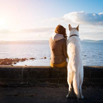 白い犬と女の子
