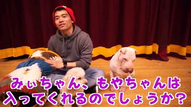 みぃちゃん、もやちゃん~字幕