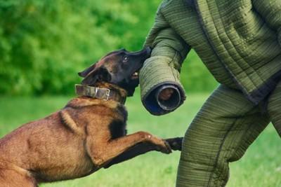 訓練で噛みつく犬