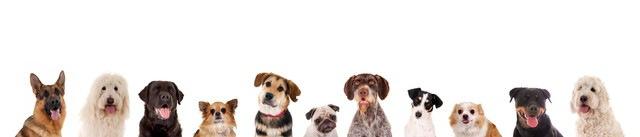 たくさんの種類の犬