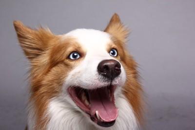ビックリした表情の犬