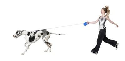 ロングリード引っ張る犬