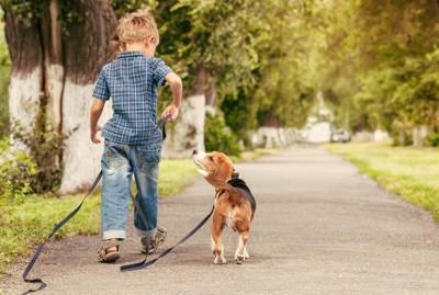 男の子とビーグル犬
