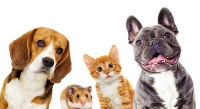 犬と猫とハムスター