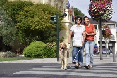 訓練中の盲導犬