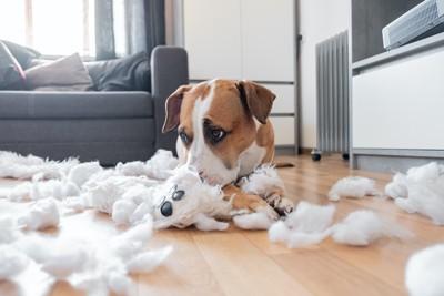ぬいぐるみをボロボロにして散らかした犬