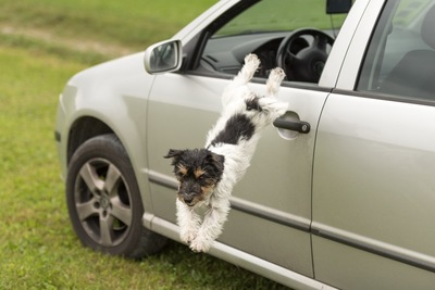 車から脱走する犬