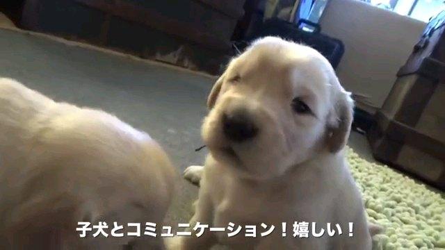 子犬と~字幕