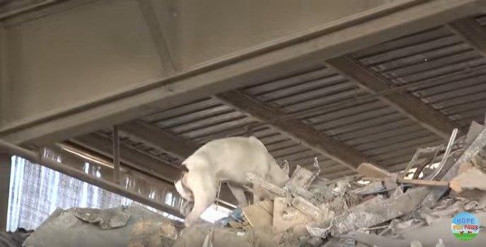 瓦礫の山を越える犬