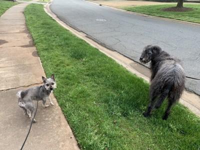 距離を置いた2匹の犬