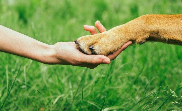 握手をする飼い主と犬