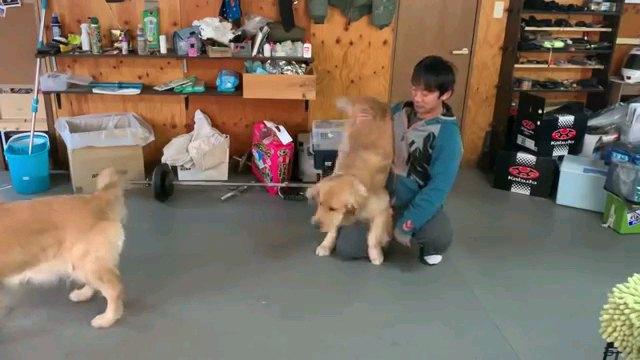 犬の下半身を持ち上げる人