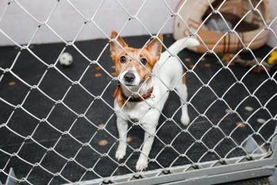 ケージに入って不安げな表情をしている犬