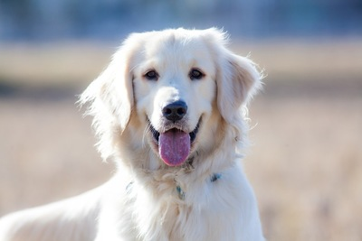 107392699 笑顔の犬
