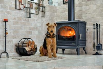 暖炉の前に座って温まる犬