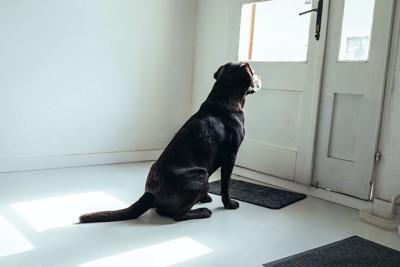 扉の前に座って外を見つめる犬の後ろ姿