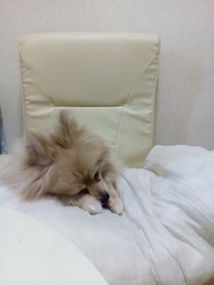 愛犬が寝るときに寄り添ってくるのがかわいい