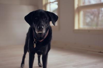straydog5