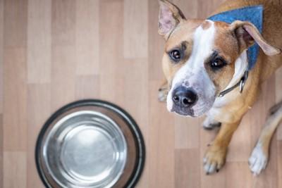空っぽの皿と犬