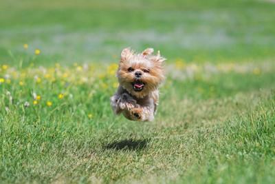宙を浮くように走る犬