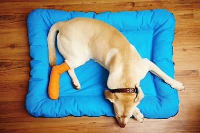 ベッドの上の足に包帯を巻いている犬