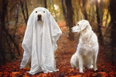 おばけの格好をした犬とそれを見つめる犬