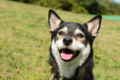 笑顔の黒い犬