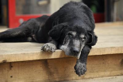 階段のそばで昼寝する老犬