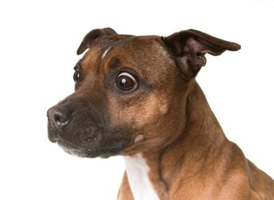 ビックリしている顔の犬