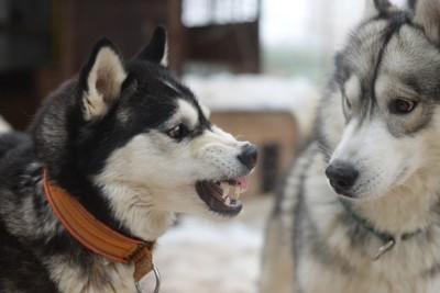 怯える犬と威嚇する犬