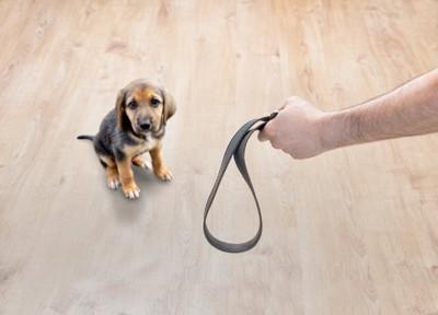 縄を見せる飼い主とそれを見る犬