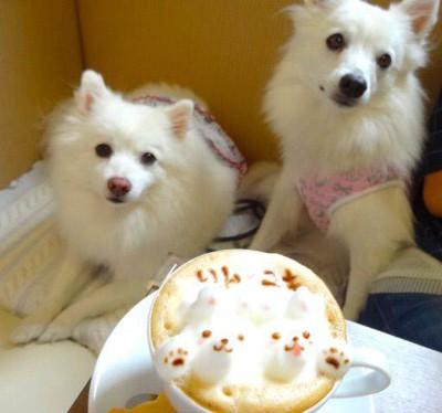 カフェアートと犬
