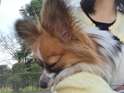 抱っこされて幸せな愛犬