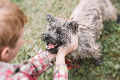 男の子に撫でられる犬