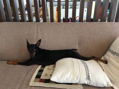 全身をまっすぐにして横たわる犬