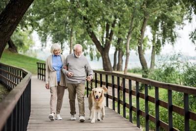 老夫婦と散歩を楽しむ犬