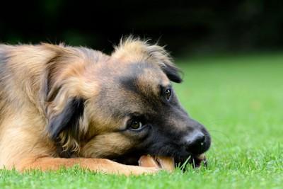 何かを食べている犬