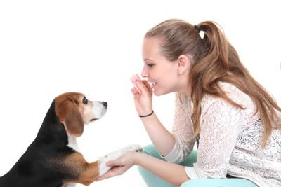 愛犬に芸を教えている人