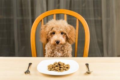 ご飯を前に座る犬