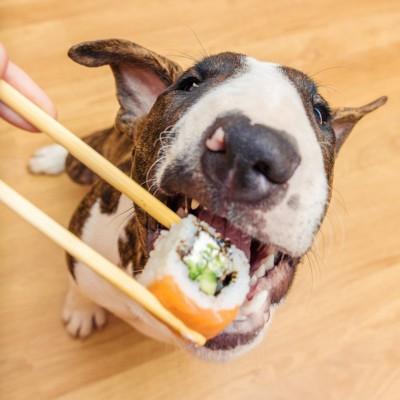お寿司を食べる犬